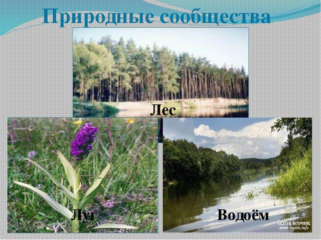Природные сообщества Лес Луг Водоём