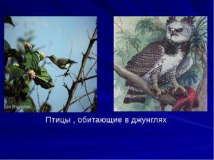 Птицы , обитающие в джунглях