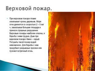 При верховом пожаре пламя охватывает кроны деревьев. Море огня движется со ск