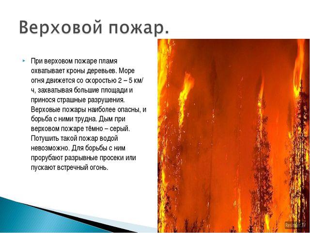 При верховом пожаре пламя охватывает кроны деревьев. Море огня движется со ск...