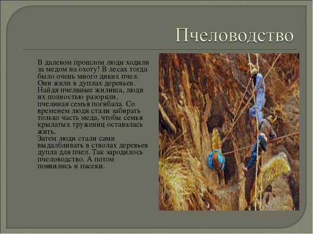 В далеком прошлом люди ходили за медом на охоту! В лесах тогда было очень мн...