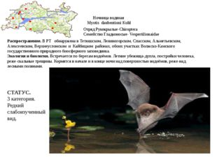 Ночница водяная Myotis daubentioni Kuhl Отряд Рукокрылые-Chiroptera Семейство