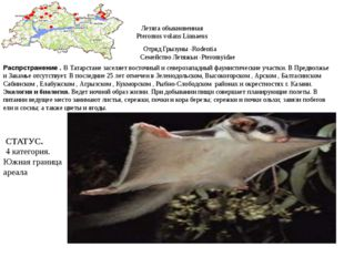 Летяга обыкновенная Pteromus volans Linnaeus Отряд Грызуны -Rodentia Семейств