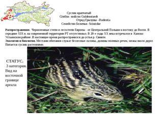 Суслик крапчатый Citellus suslicus Guldenstaedt Отряд Грызуны –Rodentia Семей