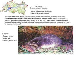 Выхухоль Desmana moschata Linnaeus Отряд Насекомоядные-Insectivora Cемейство