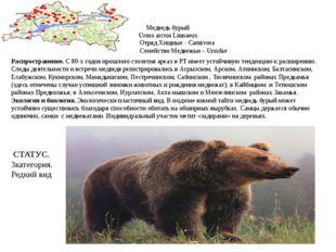 Медведь бурый Ursus arctos Linnaeus Отряд Хищные - Carnivora Семейство Медвеж
