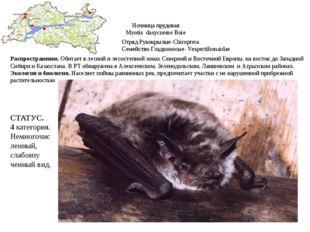 Ночница прудовая Myotis dasycneme Boie Отряд Рукокрылые-Chiroptera Семейство