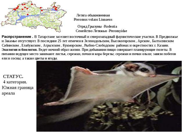 Летяга обыкновенная Pteromus volans Linnaeus Отряд Грызуны -Rodentia Семейств...