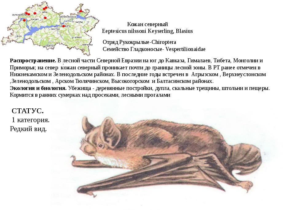 Кожан северный Eeptesicus nilssoni Keyserling, Blasius Отряд Рукокрылые-Chiro...