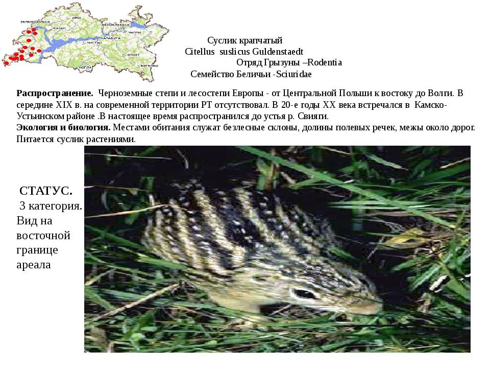 Суслик крапчатый Citellus suslicus Guldenstaedt Отряд Грызуны –Rodentia Семей...