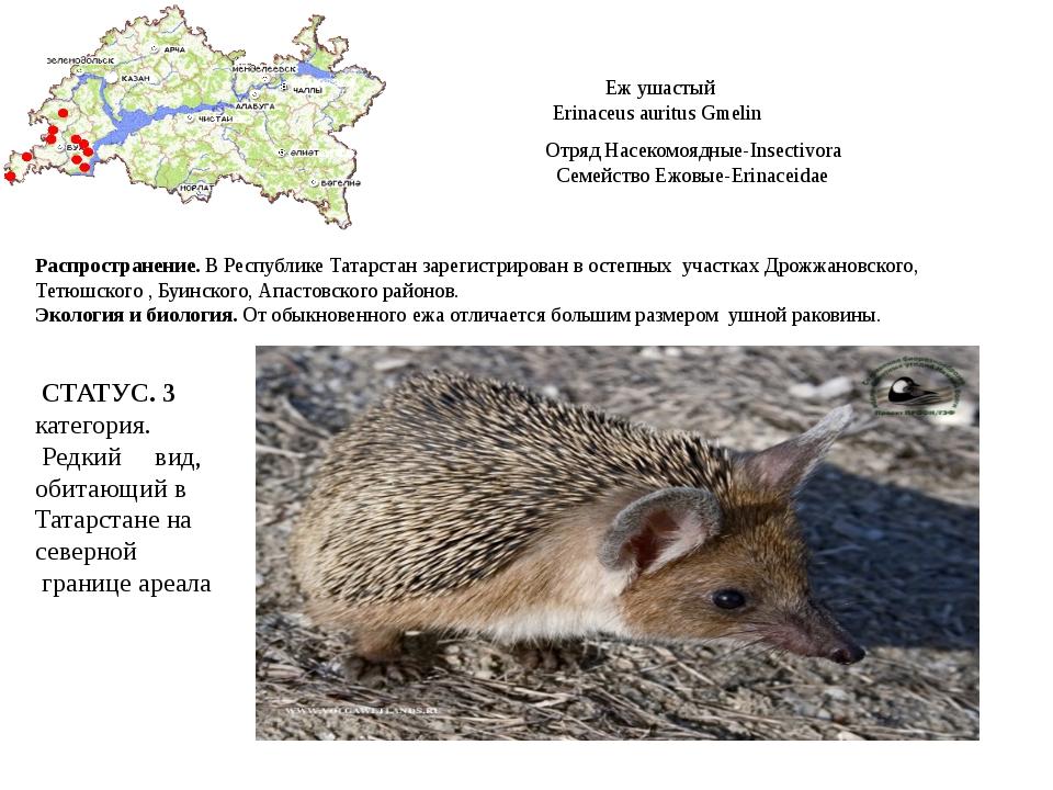 Еж ушастый Erinaceus auritus Gmelin Отряд Насекомоядные-Insectivora Семейство...