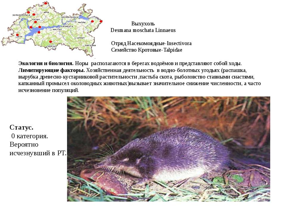 Выхухоль Desmana moschata Linnaeus Отряд Насекомоядные-Insectivora Cемейство...