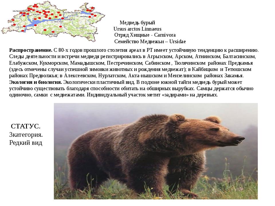 Медведь бурый Ursus arctos Linnaeus Отряд Хищные - Carnivora Семейство Медвеж...