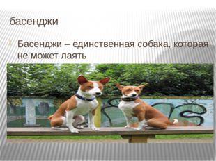 басенджи Басенджи – единственная собака, которая не может лаять Подробнее на