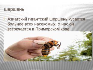 шершень Азиатский гигантский шершень кусается больнее всех насекомых. У нас о