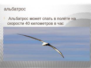 альбатрос Альбатрос может спать в полёте на скорости 40 километров в час Подр