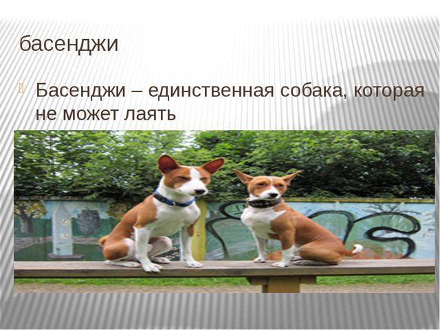 басенджи Басенджи – единственная собака, которая не может лаять Подробнее на...