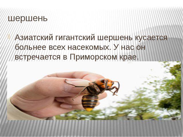 шершень Азиатский гигантский шершень кусается больнее всех насекомых. У нас о...