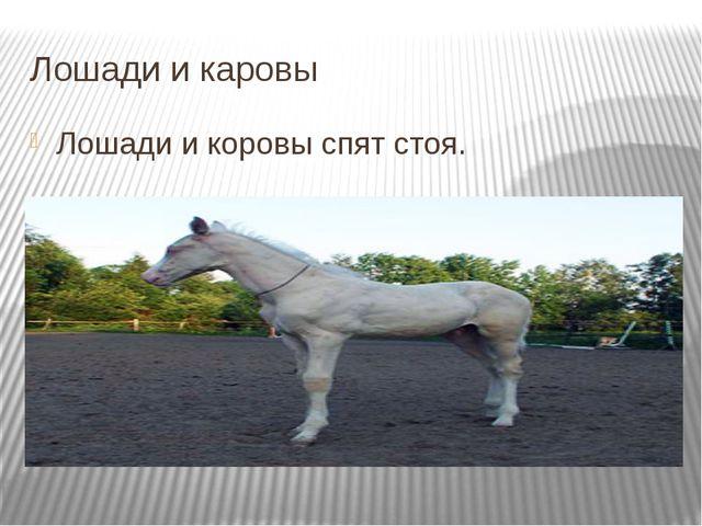 Лошади и каровы Лошади и коровы спят стоя. Подробнее на странице