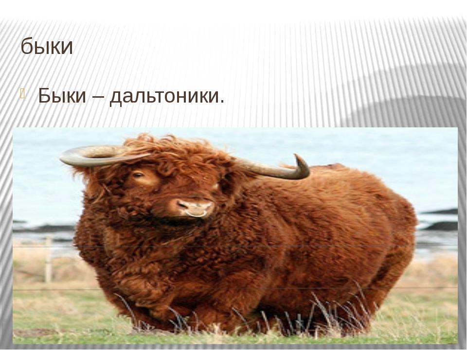 быки Быки – дальтоники. Подробнее на странице