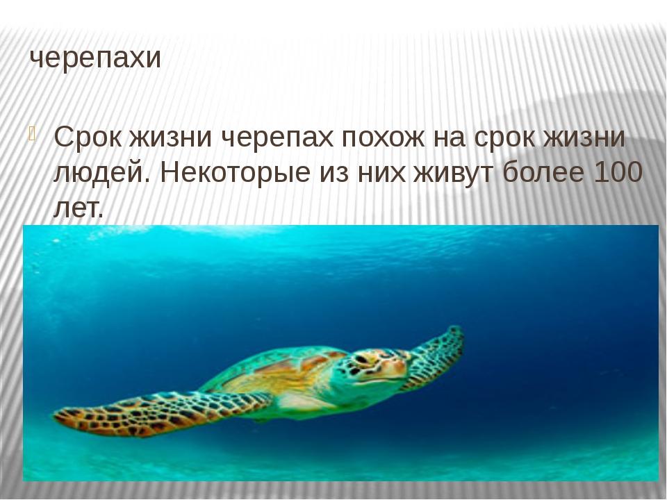 черепахи Срок жизни черепах похож на срок жизни людей. Некоторые из них живут...