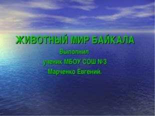 ЖИВОТНЫЙ МИР БАЙКАЛА Выполнил ученик МБОУ СОШ №3 Марченко Евгений.