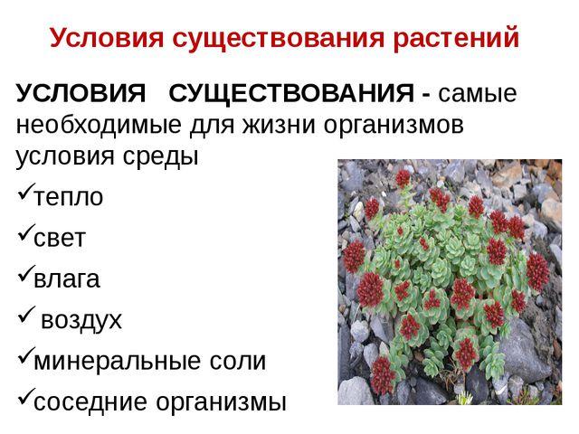 Условия существования растений УСЛОВИЯ СУЩЕСТВОВАНИЯ - самые необходимые для...