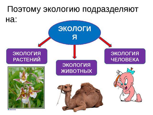 Поэтому экологию подразделяют на: ЭКОЛОГИЯ ЭКОЛОГИЯ ЖИВОТНЫХ ЭКОЛОГИЯ РАСТЕН...