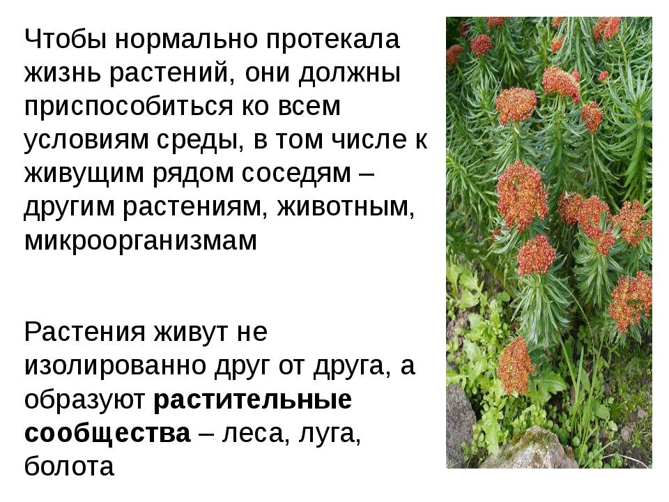 Чтобы нормально протекала жизнь растений, они должны приспособиться ко всем у...