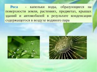 Роса - капельки воды, образующиеся на поверхности земли, растениях, предмет