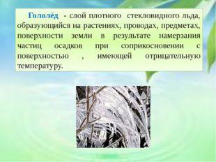 Гололёд - слой плотного стекловидного льда, образующийся на растениях, пров