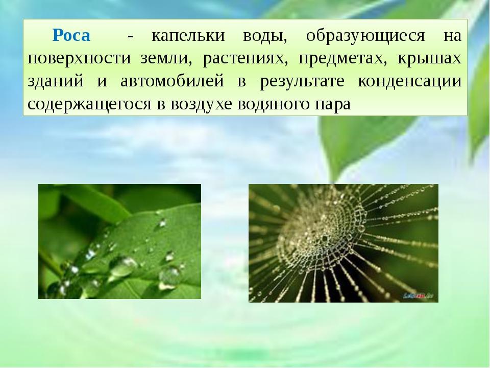 Роса - капельки воды, образующиеся на поверхности земли, растениях, предмет...