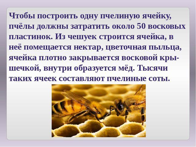 Чтобы построить одну пчелиную ячейку, пчёлы должны затратить около 50 восковы...