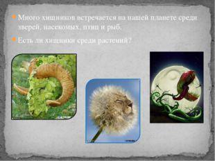 Много хищников встречается на нашей планете среди зверей, насекомых, птиц и р