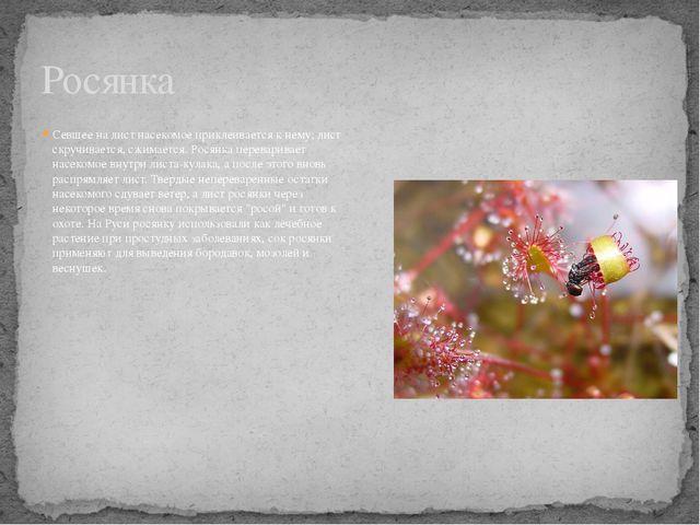 Севшее на лист насекомое приклеивается к нему; лист скручивается, сжимается....