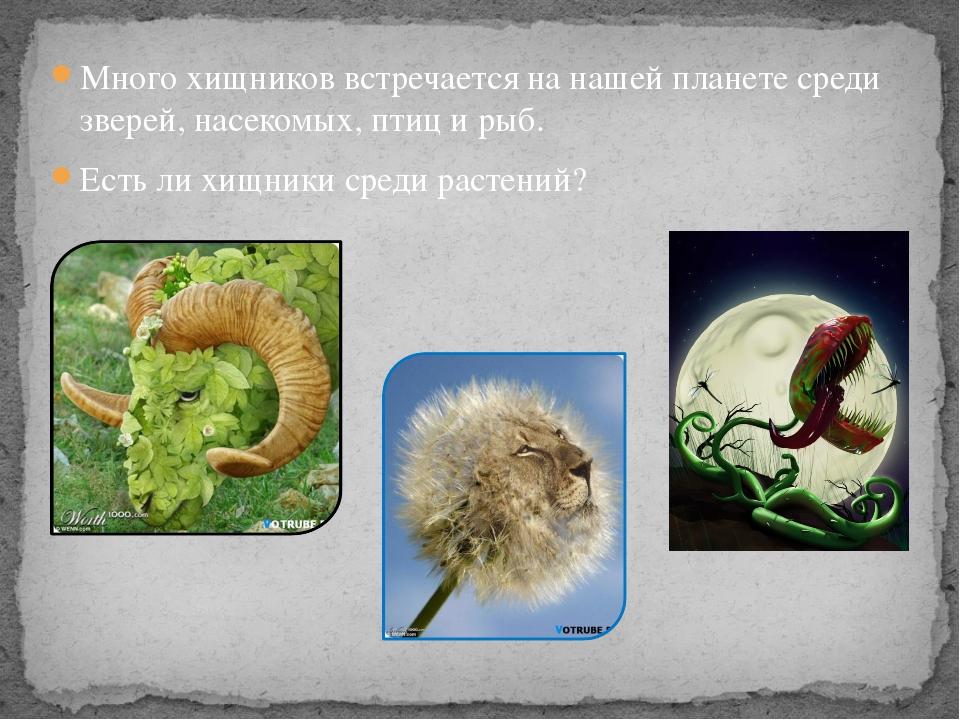 Много хищников встречается на нашей планете среди зверей, насекомых, птиц и р...