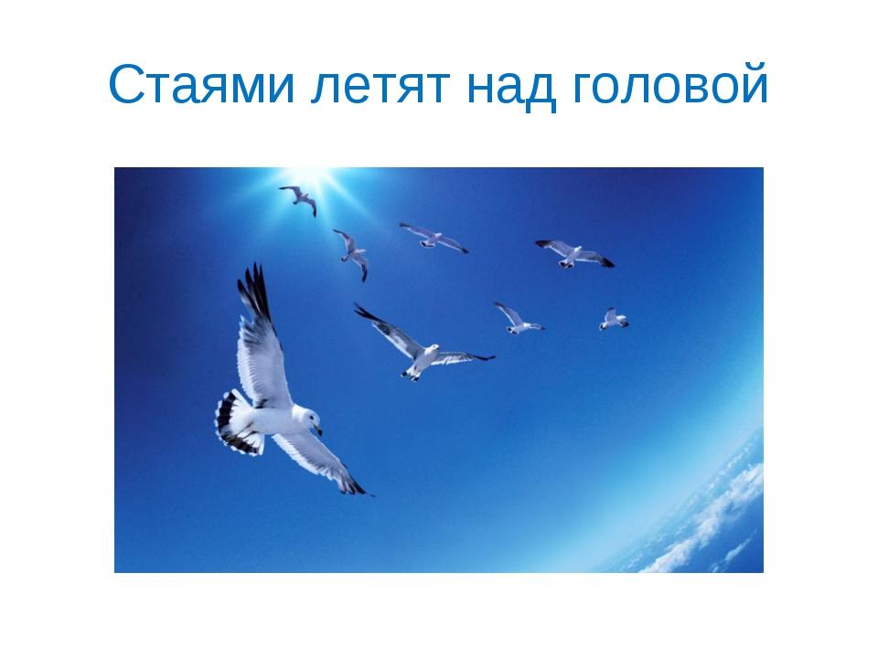 Стаями летят над головой