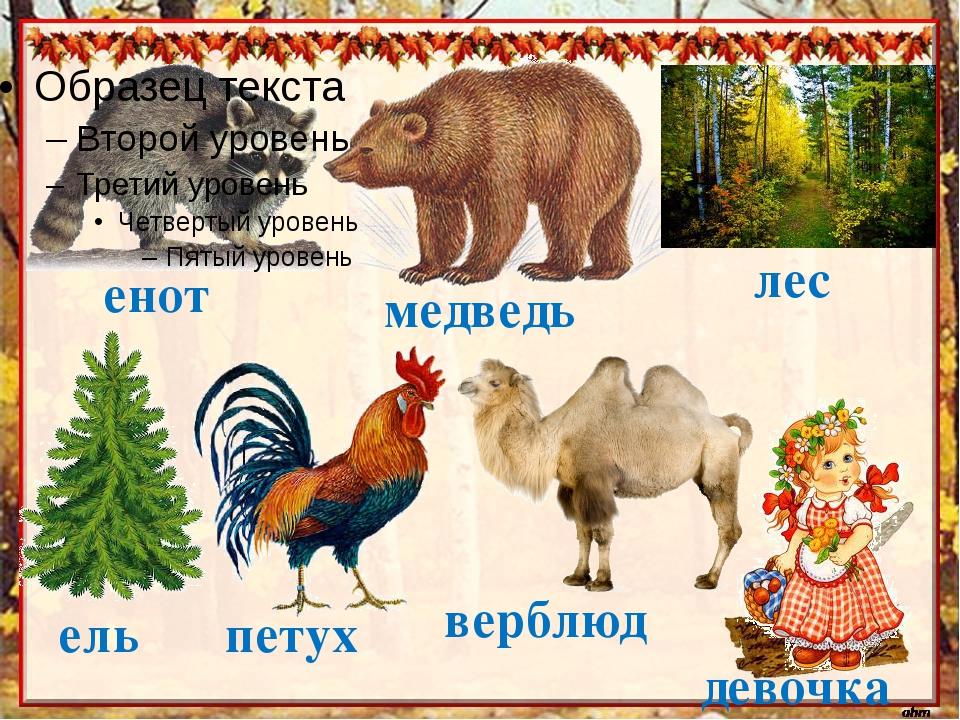 енот девочка верблюд петух ель медведь лес
