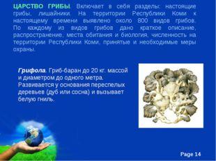 ЦАРСТВО ГРИБЫ. Включает в себя разделы: настоящие грибы, лишайники. На террит