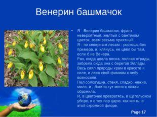 Венерин башмачок Я - Венерин башмачок, франт невероятный, желтый с бантиком ц