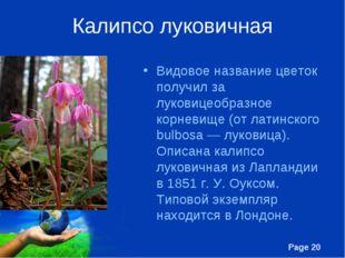 Калипсо луковичная Видовое название цветок получил за луковицеобразное корнев
