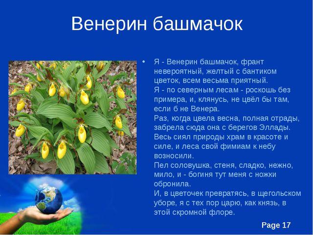 Венерин башмачок Я - Венерин башмачок, франт невероятный, желтый с бантиком ц...
