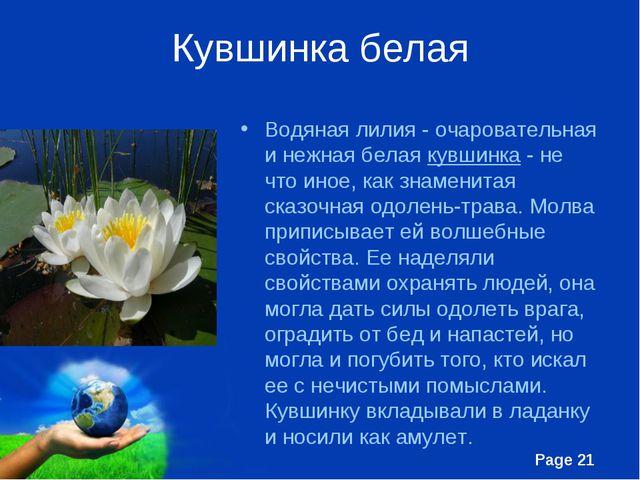 Кувшинка белая Водяная лилия - очаровательная и нежная белая кувшинка - не чт...