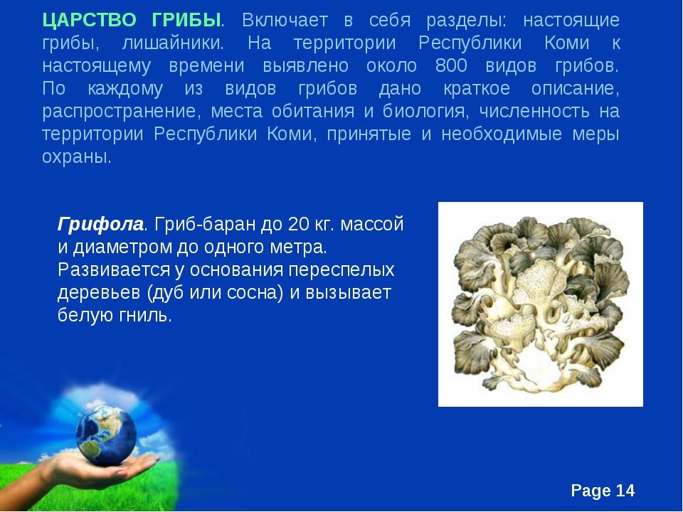 ЦАРСТВО ГРИБЫ. Включает в себя разделы: настоящие грибы, лишайники. На террит...