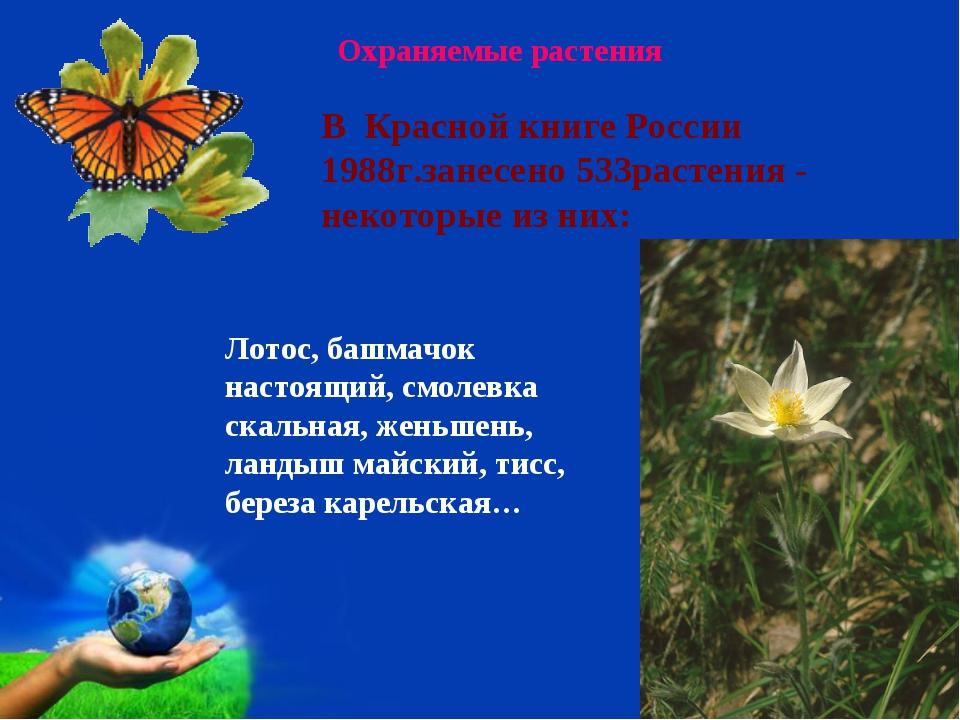 Охраняемые растения Лотос, башмачок настоящий, смолевка скальная, женьшень, л...