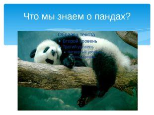 Что мы знаем о пандах?