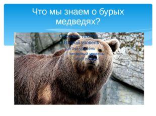 Что мы знаем о бурых медведях?