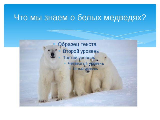 Что мы знаем о белых медведях?