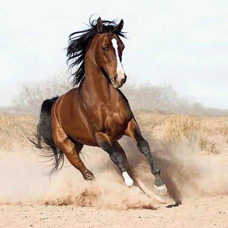 http://qazaq-el.narod.ru/olderfiles/1/horse.jpg