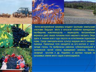 Англо-австралийские фермеры владеют крупными земельными участками. Ведущее м